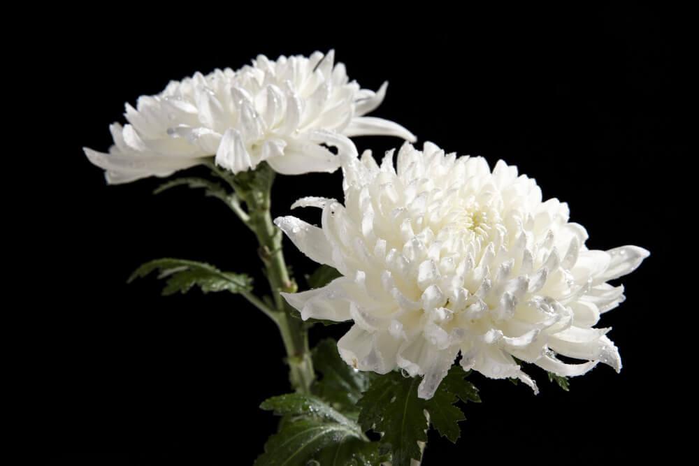 kwiaty na pogrzeb wyszkow nekropolis